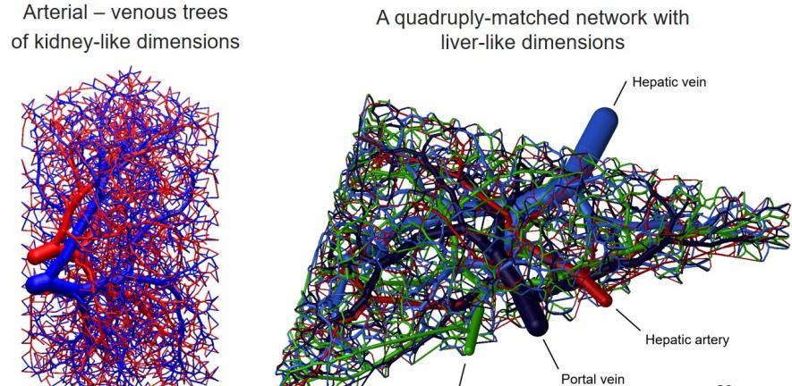biomimetic 3D printable networks.jpg